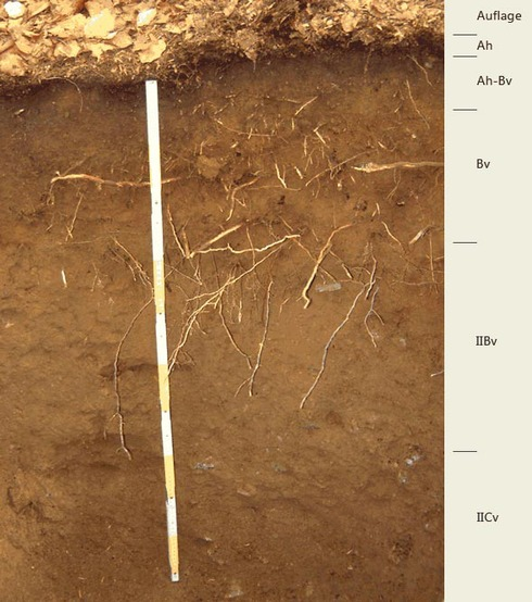 Soil profile of the sampling site Forellenbuchet; Photo: FhG IME