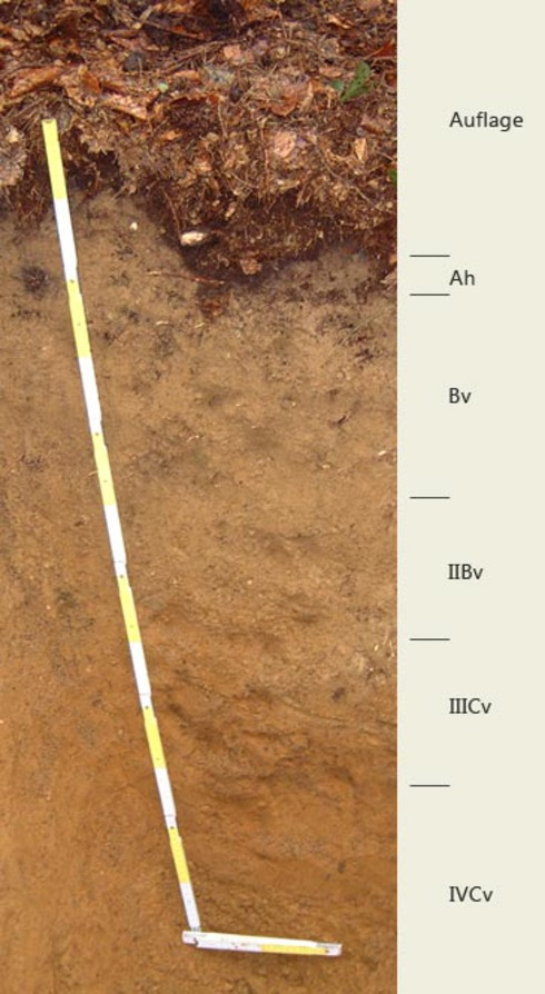 Soil profile of the sampling area Großpalmberg; Photo FhG IME