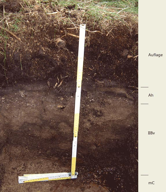 Soil profile of the sampling site Naturdenkmal Stempelsbuche; Photo: FhG IME
