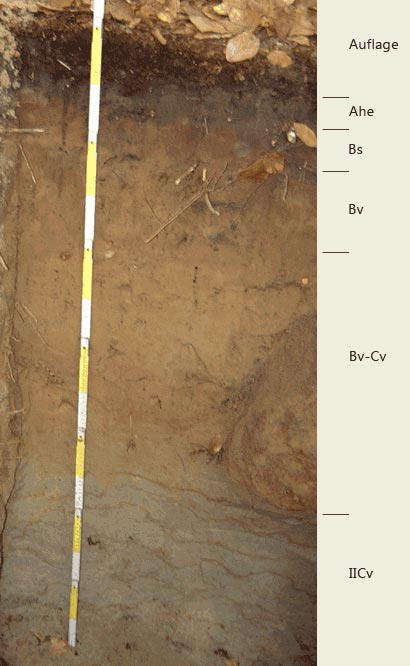 Soil profile of the sampling site Revier Lutherstein; Photo: FhG IME